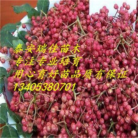 在我国的青海省用枝接法嫁接花椒,一般于清明前剪取高产花椒1年生枝条